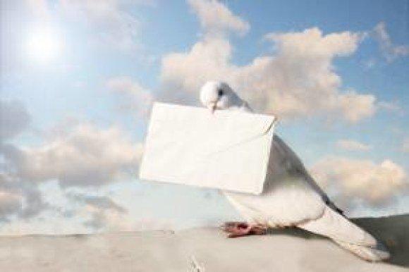 verizon carrier pigeon