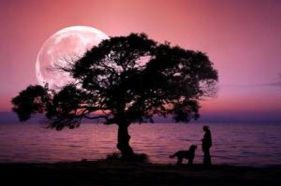boston proper twilight tree