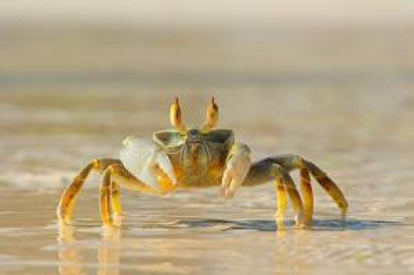 boston proper crab