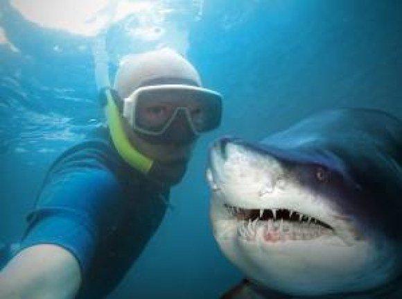 verizon shark diver selfie