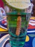 verizon agave worm glass