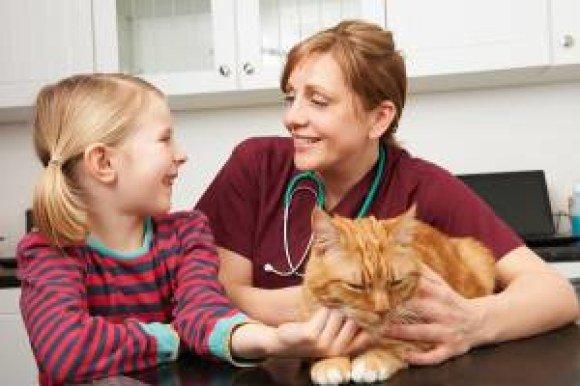 just4mypet vet child cat